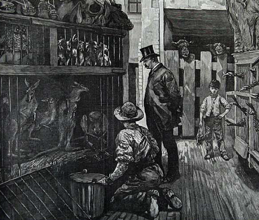 Contemporary depiction of Charles Jamrach's shop from the 'London Illustrated News'.  The pet store was located on the Ratcliffe Highway, now known simply as the Highway.