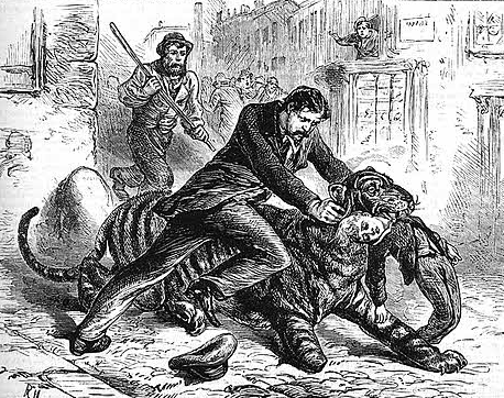 Illustration of Jamrach confronting the runaway tiger. (Image from the 'Boy's Own Paper', 1879).