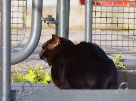 A contented cat... the only sign of life at Tobacco Dock in 2013.