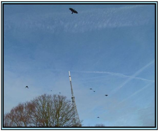 Crystal Palace Crows