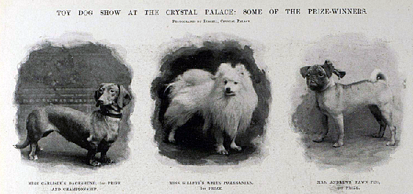 A selection of Crystal Palace dog show winners... (Image: London Illustrated News).