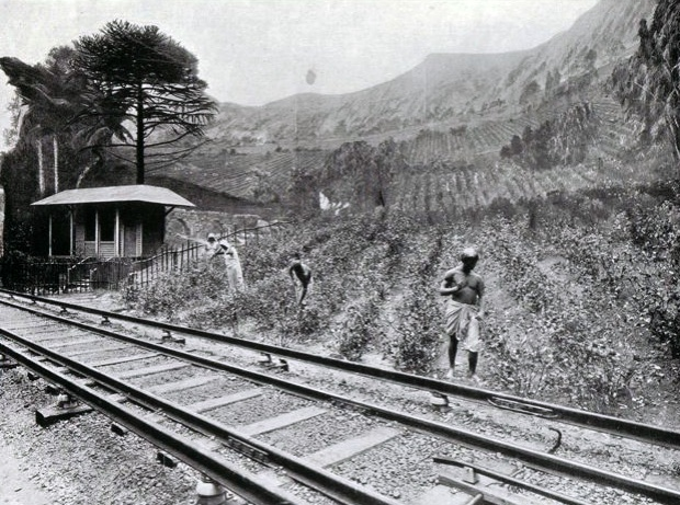 The 'Red Route' line running past a mock-up of an Indian tea plantation.