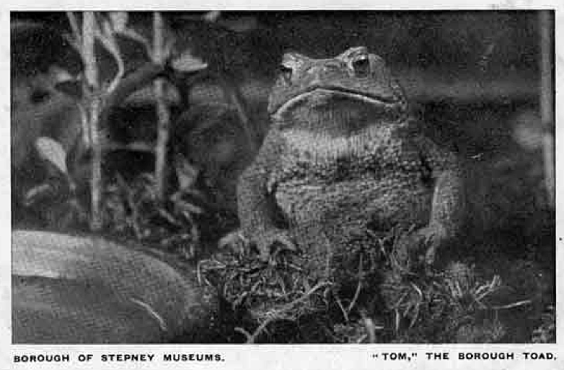 "Tom the Italian Toad... of whom one child wrote, ""When we look at it, it makes a snap at us, as if it wants to eat us."" (Image: St George in the East Church website)."