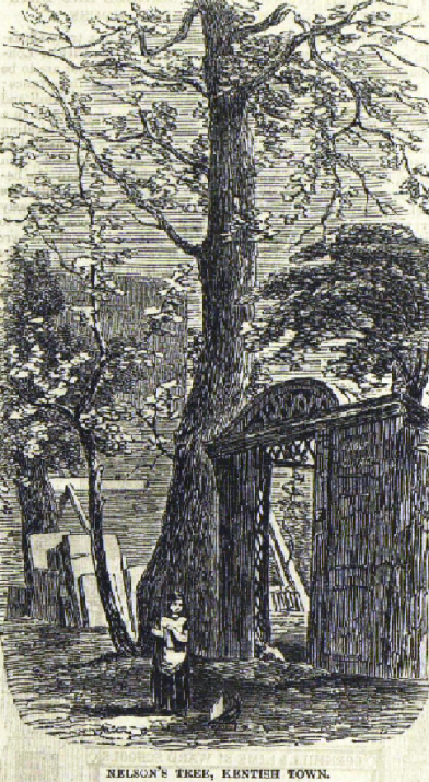 Nelson's Tree, 1843 (image: London Illustrated News).