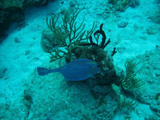 The beauty of the Chankanaab Reef (image: Trip Advisor)
