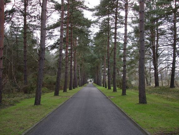 A peaceful avenue through Brookwood Cemetery (image: Wikipedia)