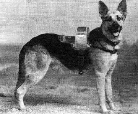 'Handsome Boy Prince'; a charity dog which once worked at East Croydon station (image: Old Southeronians Association).
