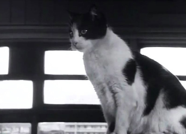 Waterloo signal box cat, 1961.