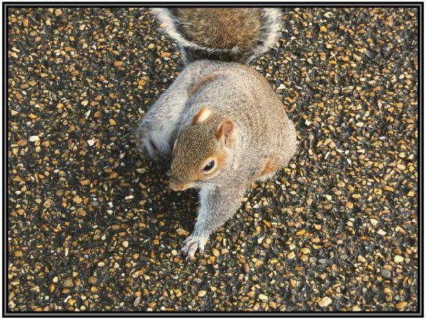 Street Squirrel